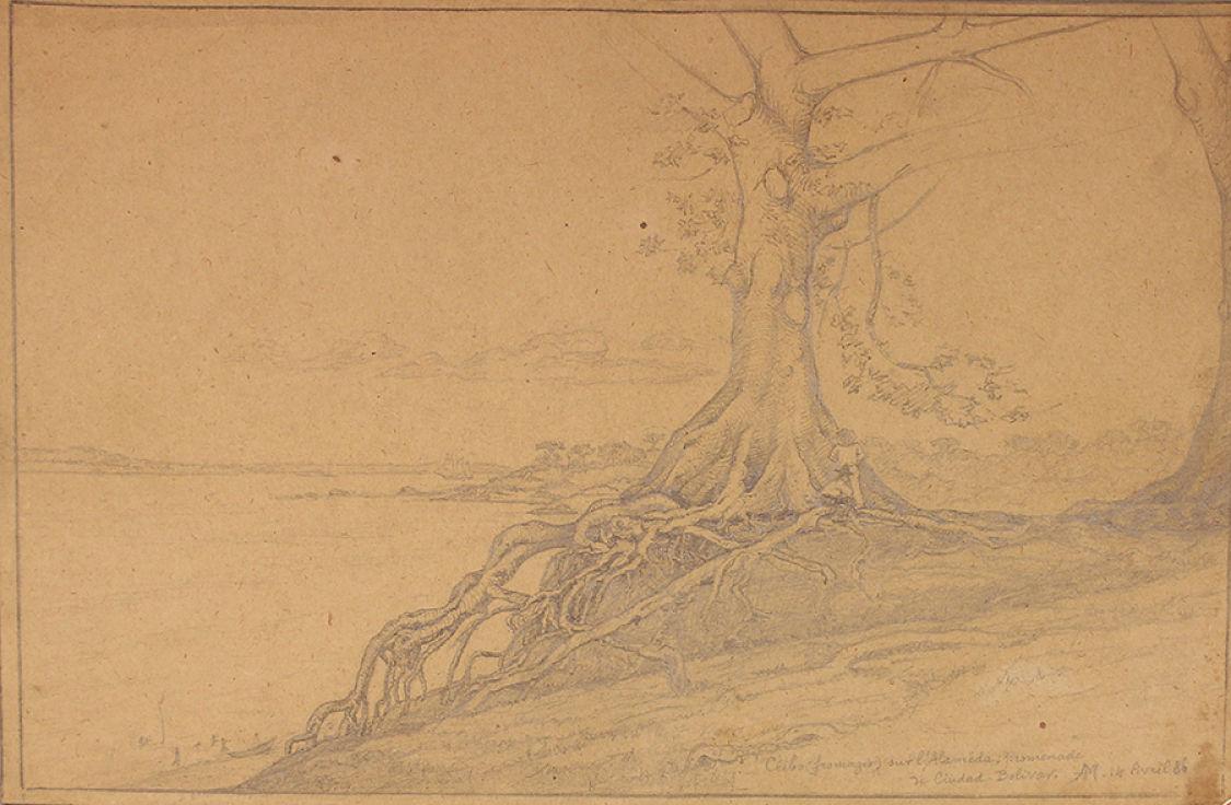 Auguste Morisot, Ceibas (14 de abril de 1886). Grafito sobre papel
