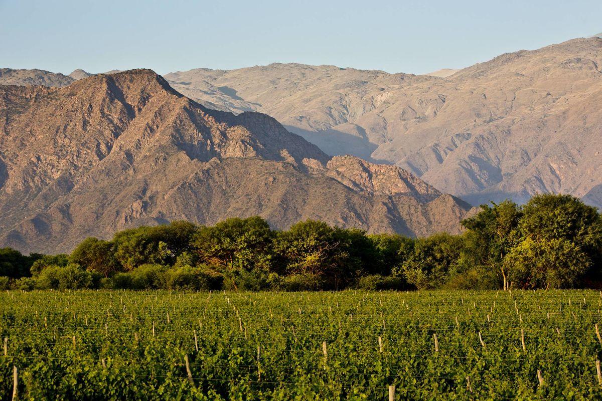 Viñedo Cafayate en los Valles Calchaquíes. Foto: Grace Hotels.